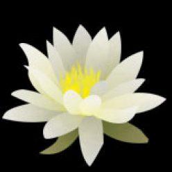 White Lotus Judith Ragir