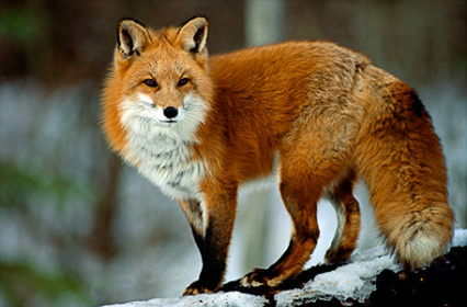 book of ra fur windows 8